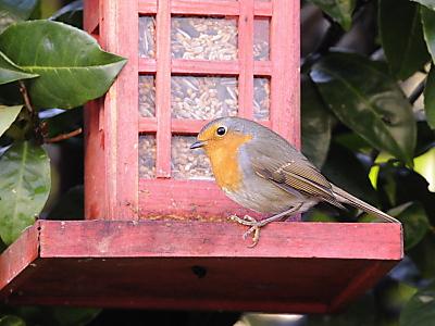 Vögel auf Wohnungssuche - Jetzt Nistkästen aufhängen