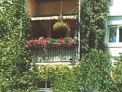 Kletterpflanzen sorgen für Sichtschutz auf dem Balkon