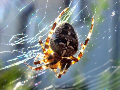 Spinnen dämmen Schädlinge im Garten ein