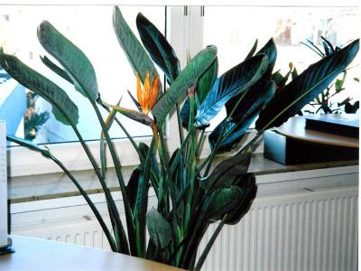Blumen schön in Szene setzen
