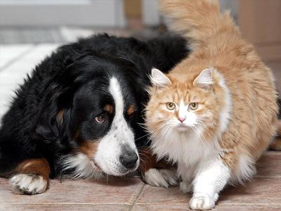 Eine ruhige Ecke für den Hund, ein bequemer Zugang für die Katze