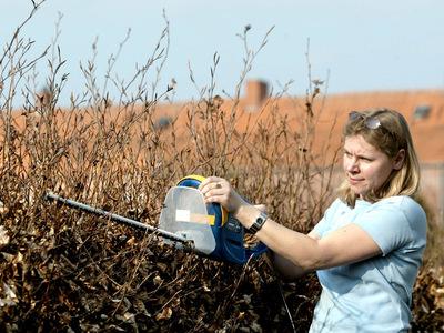 Vogelschutz: Starkes Beschneiden von Hecken erst im Herbst erlaubt