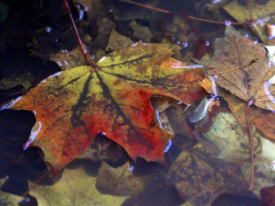 Räumpflicht auch bei Herbstlaub ernst nehmen