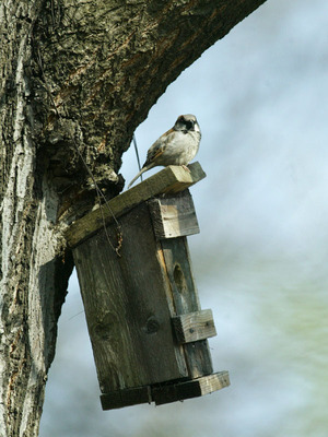 Vögel im Winter richtig füttern