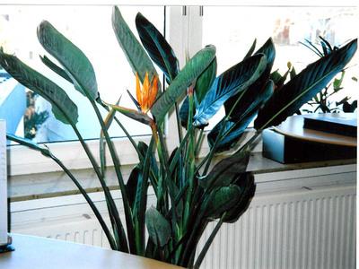 Zimmerpflanzen regelmäßig umtopfen