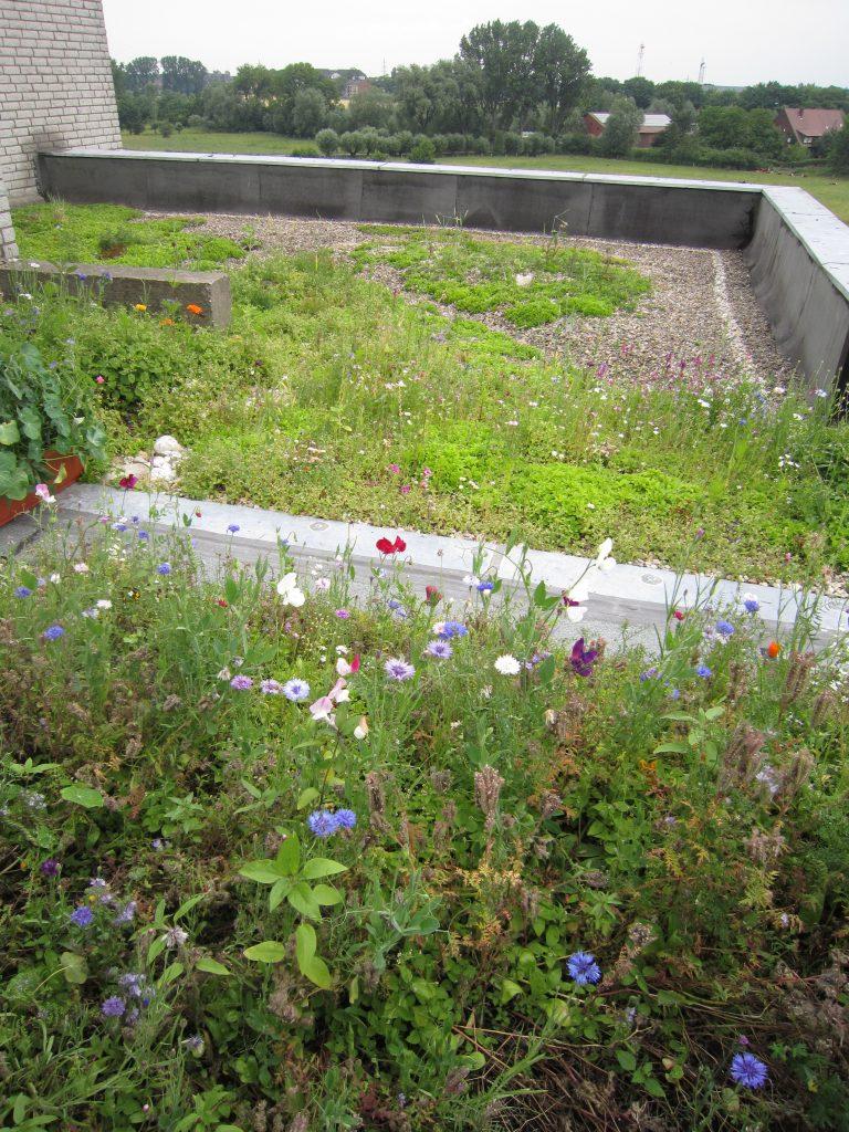 Flachdach mit Gartenbegrünung