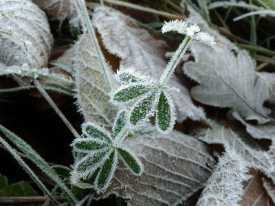 Frost Pfanzen schützen
