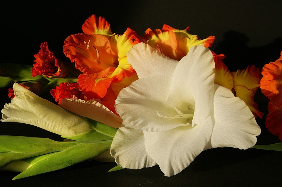 lebendig und frisch blumen in der wohnung lilien und gladiolen als hingucker in der diele. Black Bedroom Furniture Sets. Home Design Ideas