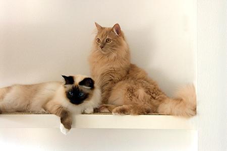 Haustiere Wohnung Katzen Bild