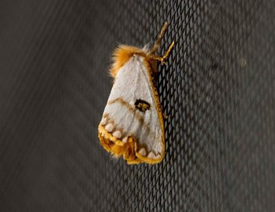 insekt fliegengitter
